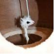 Mačacie škrabadlo MINA L - béžová
