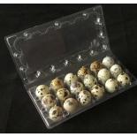 Transportný obal na 18 ks prepeličích vajec - blister