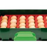 Sada držiakov vajec pre liahne Covina / ET49, Real 49